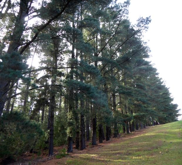 forest colour